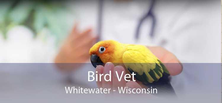 Bird Vet Whitewater - Wisconsin