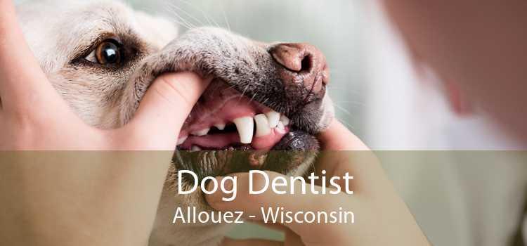 Dog Dentist Allouez - Wisconsin
