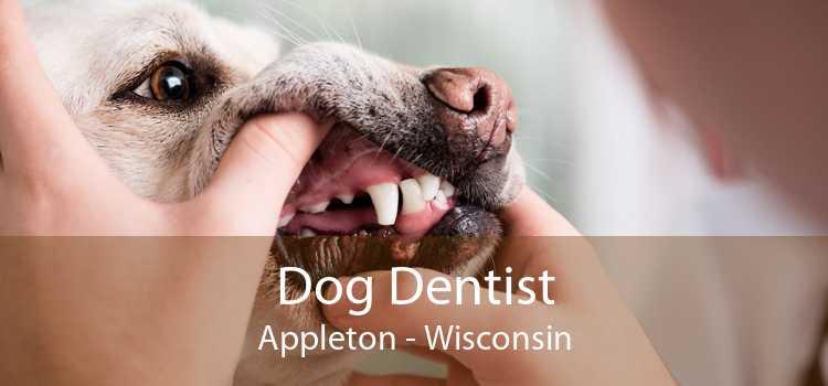 Dog Dentist Appleton - Wisconsin