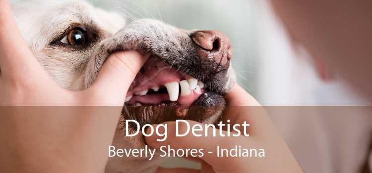 Dog Dentist Beverly Shores - Indiana