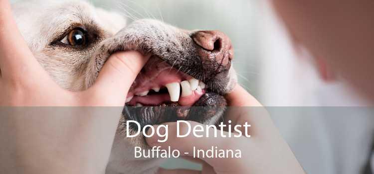 Dog Dentist Buffalo - Indiana