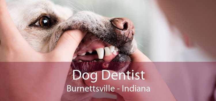 Dog Dentist Burnettsville - Indiana