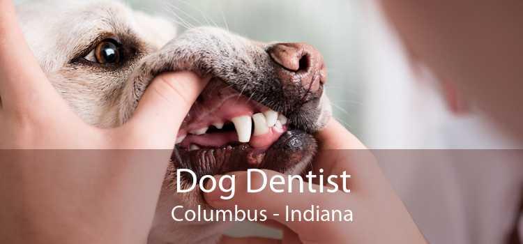 Dog Dentist Columbus - Indiana