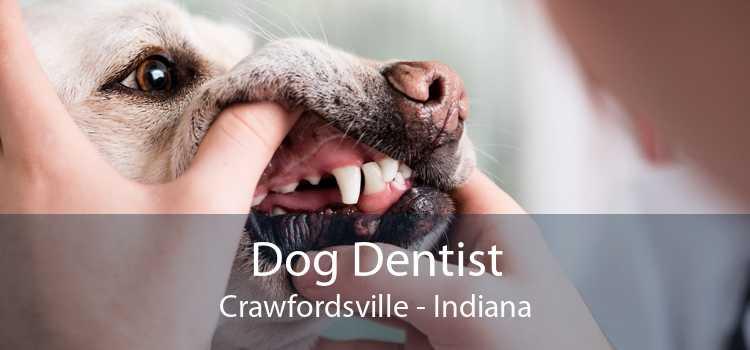 Dog Dentist Crawfordsville - Indiana