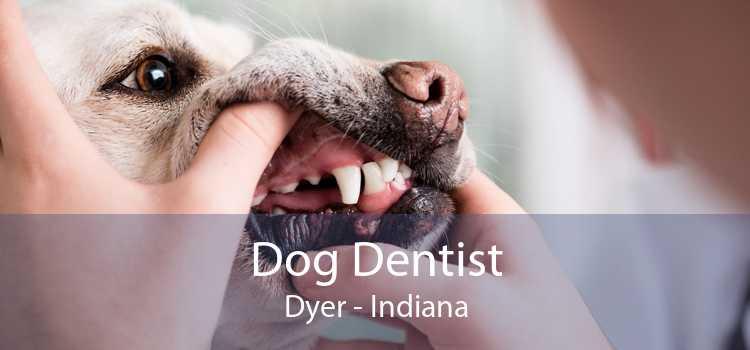 Dog Dentist Dyer - Indiana