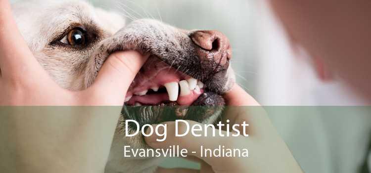 Dog Dentist Evansville - Indiana
