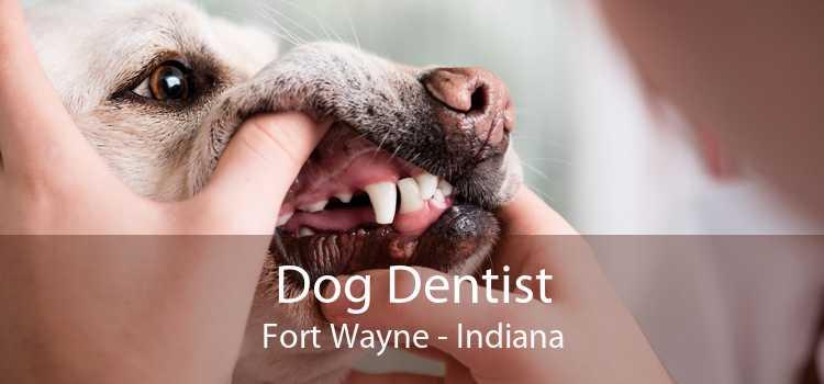 Dog Dentist Fort Wayne - Indiana