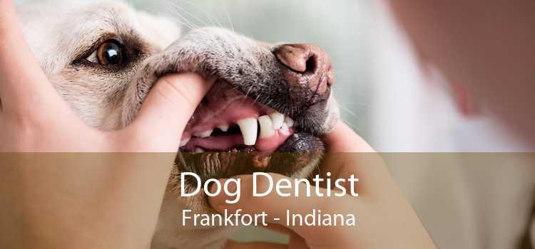 Dog Dentist Frankfort - Indiana