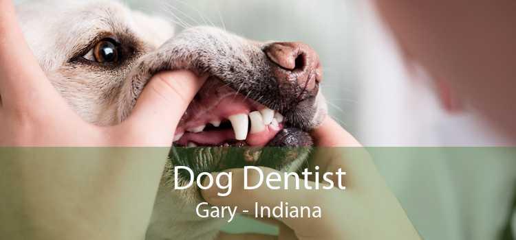 Dog Dentist Gary - Indiana
