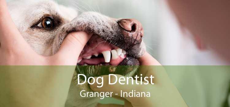 Dog Dentist Granger - Indiana