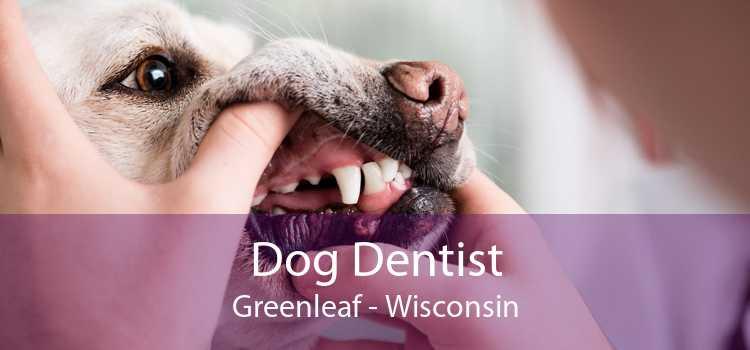 Dog Dentist Greenleaf - Wisconsin
