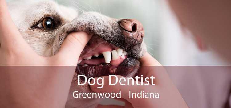 Dog Dentist Greenwood - Indiana