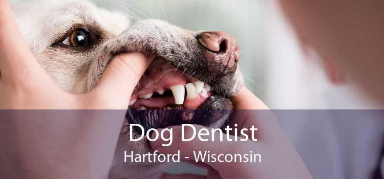 Dog Dentist Hartford - Wisconsin