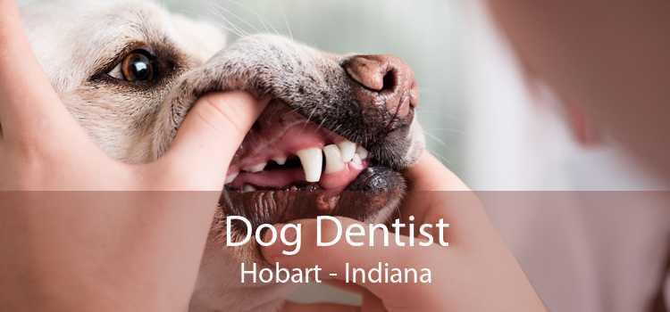 Dog Dentist Hobart - Indiana