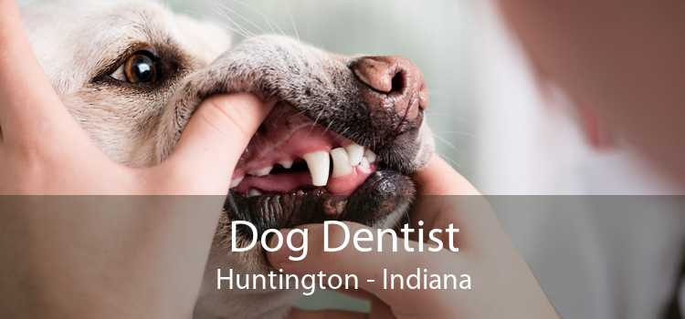 Dog Dentist Huntington - Indiana