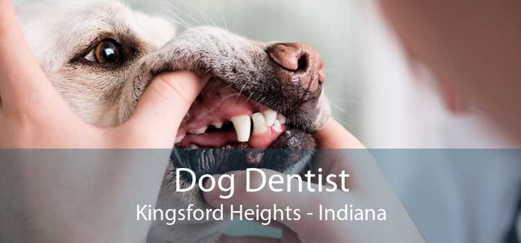 Dog Dentist Kingsford Heights - Indiana