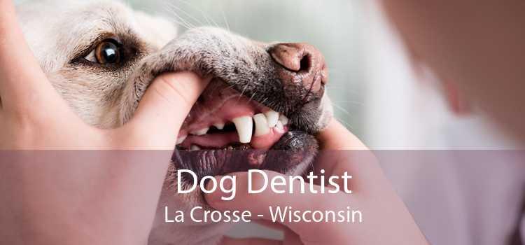 Dog Dentist La Crosse - Wisconsin