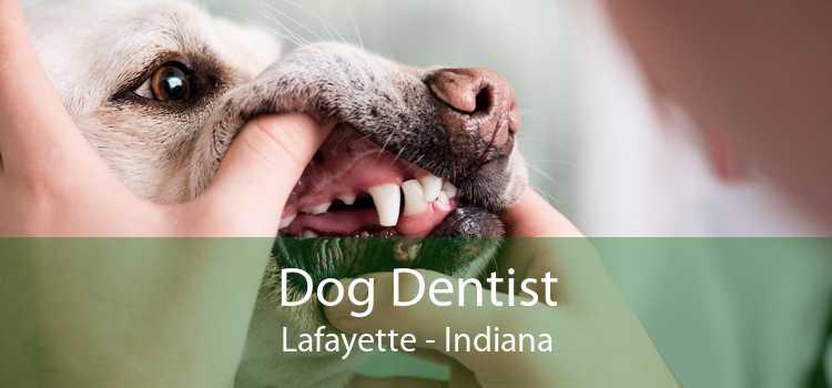 Dog Dentist Lafayette - Indiana