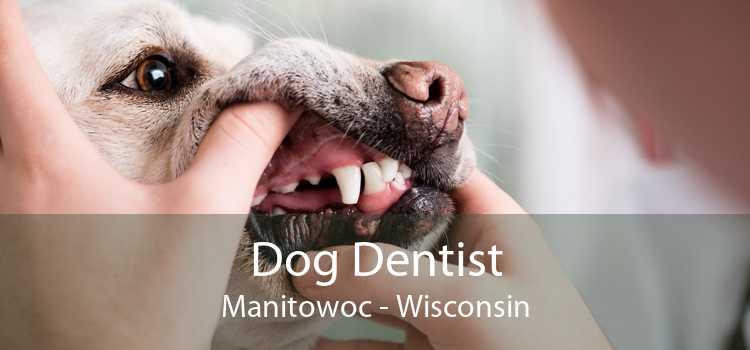 Dog Dentist Manitowoc - Wisconsin