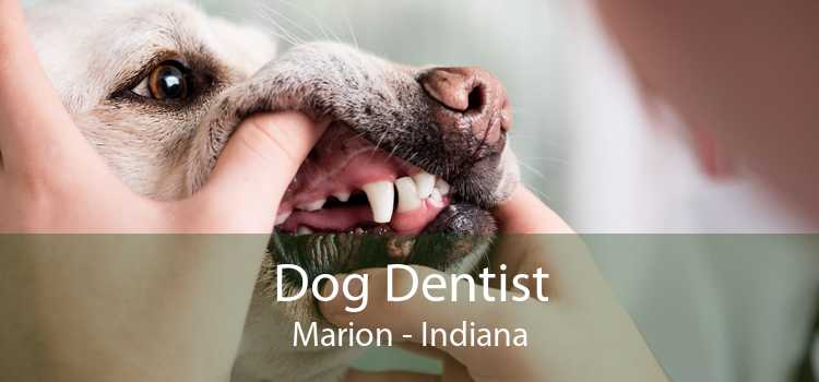 Dog Dentist Marion - Indiana