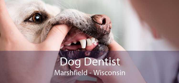 Dog Dentist Marshfield - Wisconsin