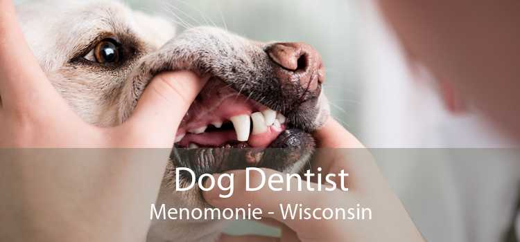 Dog Dentist Menomonie - Wisconsin