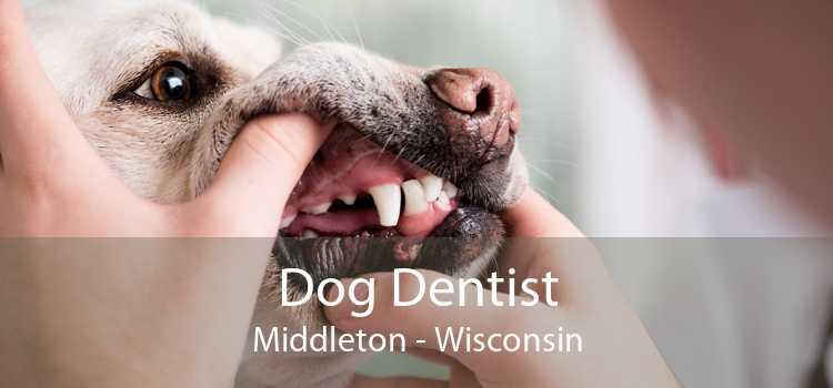 Dog Dentist Middleton - Wisconsin