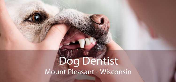 Dog Dentist Mount Pleasant - Wisconsin