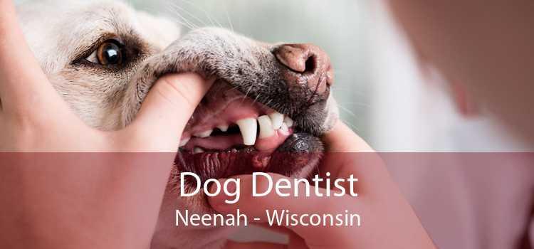 Dog Dentist Neenah - Wisconsin