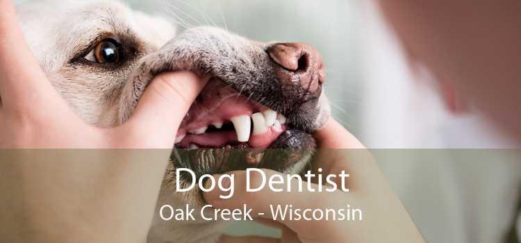 Dog Dentist Oak Creek - Wisconsin
