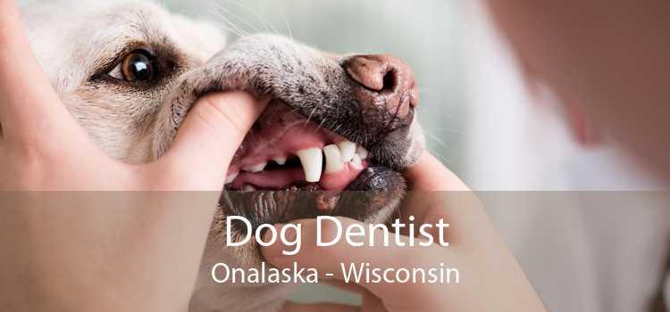 Dog Dentist Onalaska - Wisconsin
