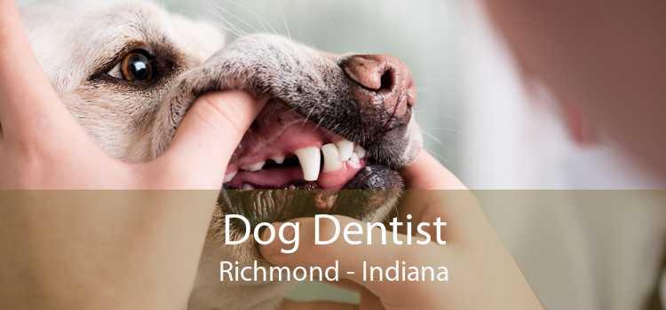 Dog Dentist Richmond - Indiana