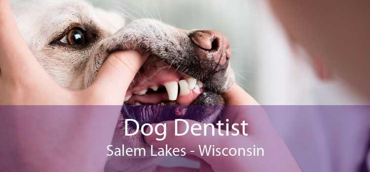 Dog Dentist Salem Lakes - Wisconsin