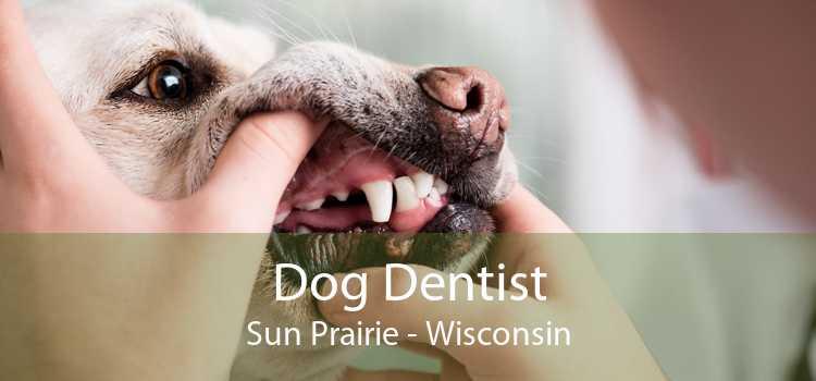 Dog Dentist Sun Prairie - Wisconsin