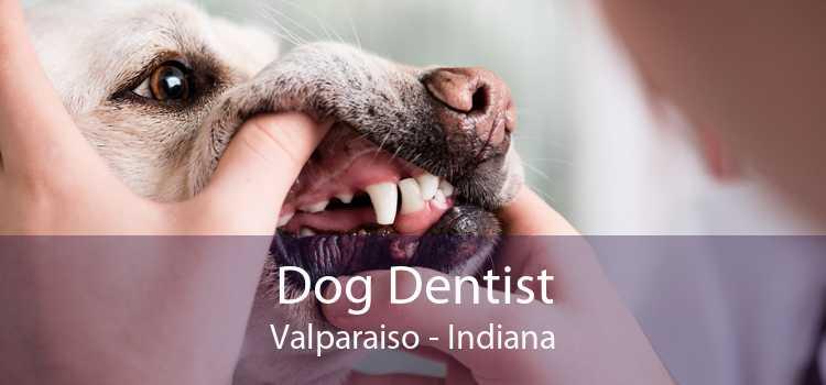 Dog Dentist Valparaiso - Indiana