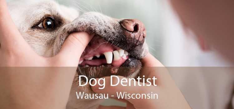 Dog Dentist Wausau - Wisconsin