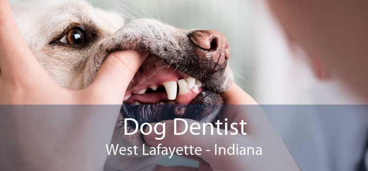 Dog Dentist West Lafayette - Indiana