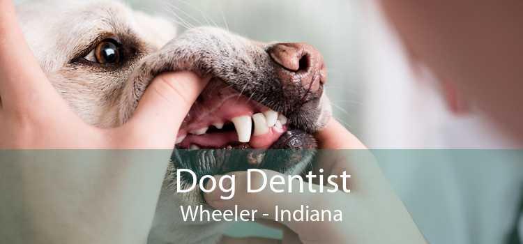 Dog Dentist Wheeler - Indiana