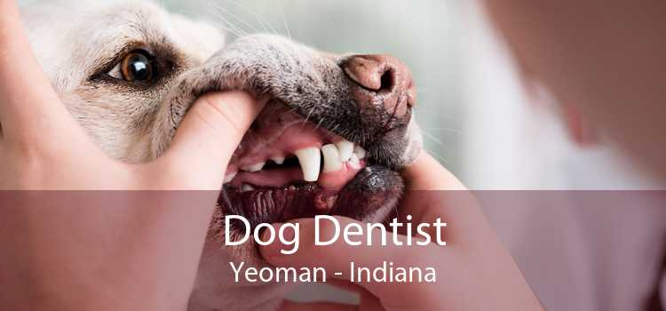 Dog Dentist Yeoman - Indiana