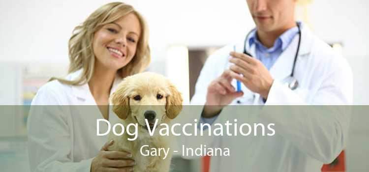 Dog Vaccinations Gary - Indiana