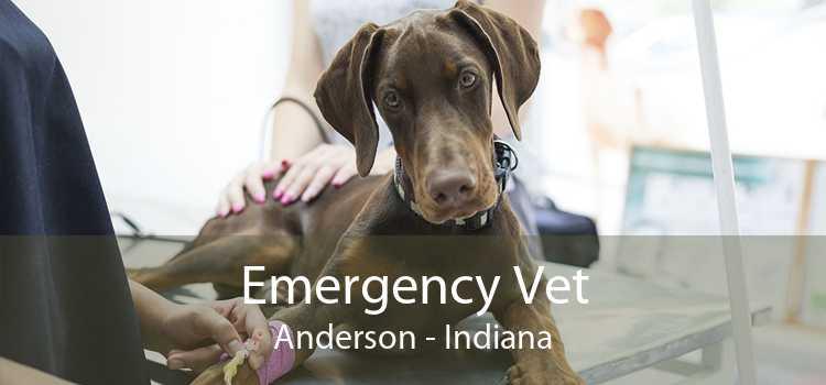 Emergency Vet Anderson - Indiana