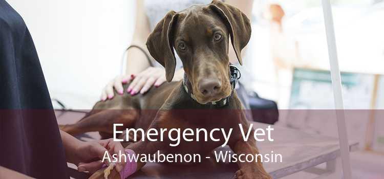 Emergency Vet Ashwaubenon - Wisconsin