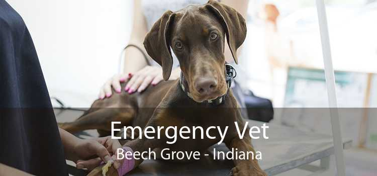 Emergency Vet Beech Grove - Indiana