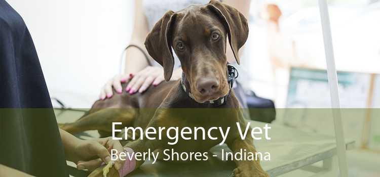 Emergency Vet Beverly Shores - Indiana