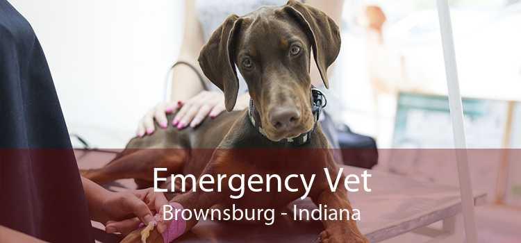 Emergency Vet Brownsburg - Indiana