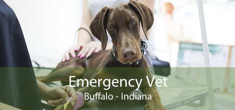 Emergency Vet Buffalo - Indiana