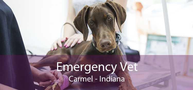 Emergency Vet Carmel - Indiana