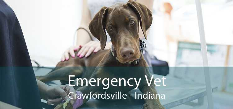Emergency Vet Crawfordsville - Indiana