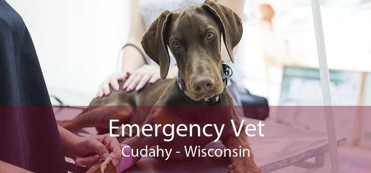 Emergency Vet Cudahy - Wisconsin