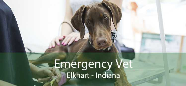 Emergency Vet Elkhart - Indiana